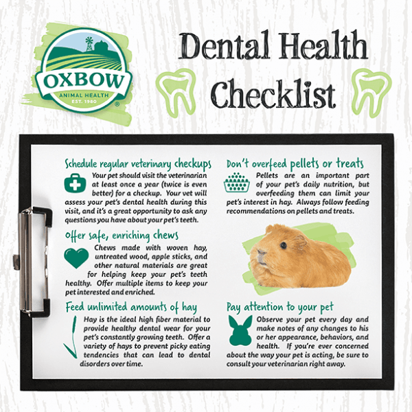 Rabbit and guinea pig dental health checklist