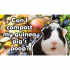 Can I Compost My Guinea Pig's Poop?
