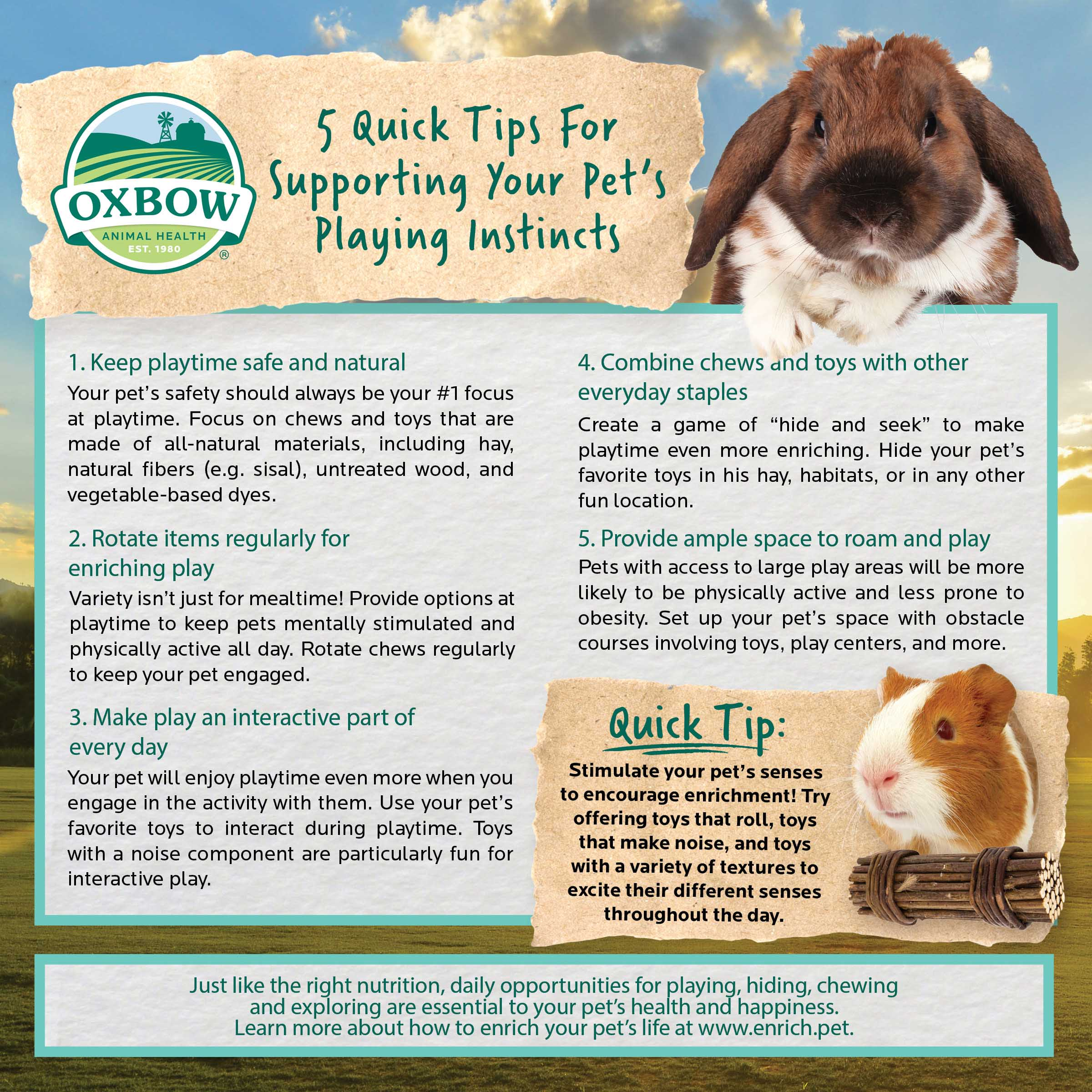5 Quick Tips for Supporting Your Pet's Playing Instincts