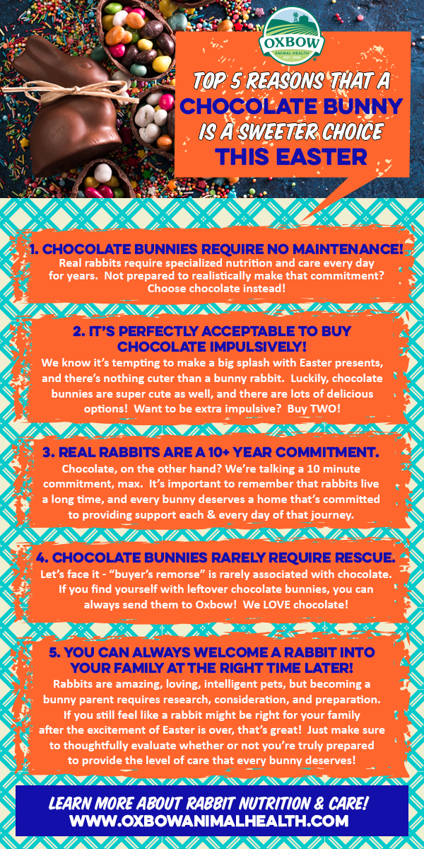 Top 5 Reasons That a Chocolate Bunny Is a Sweeter Choice This Easter