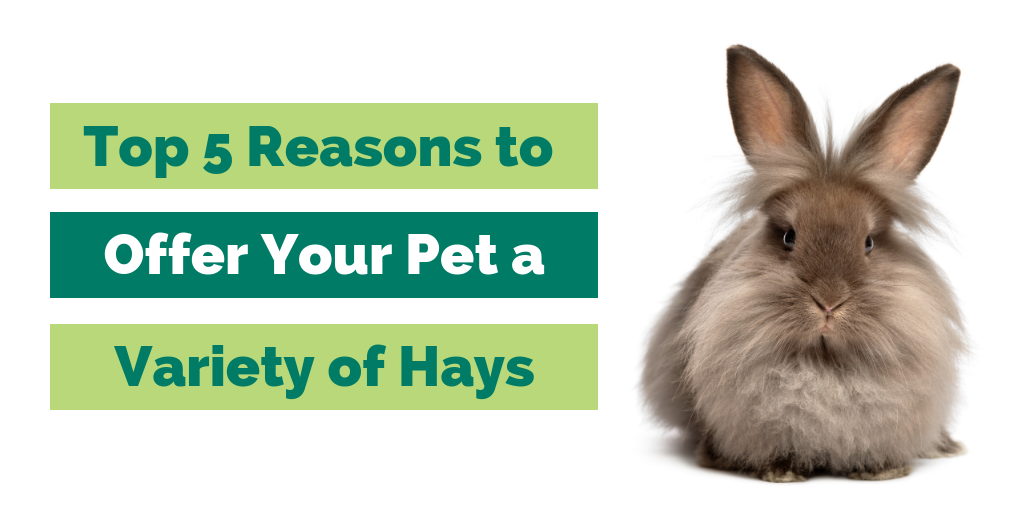 Top 5 Reasons to Offer Your Pet a Variety of Hays