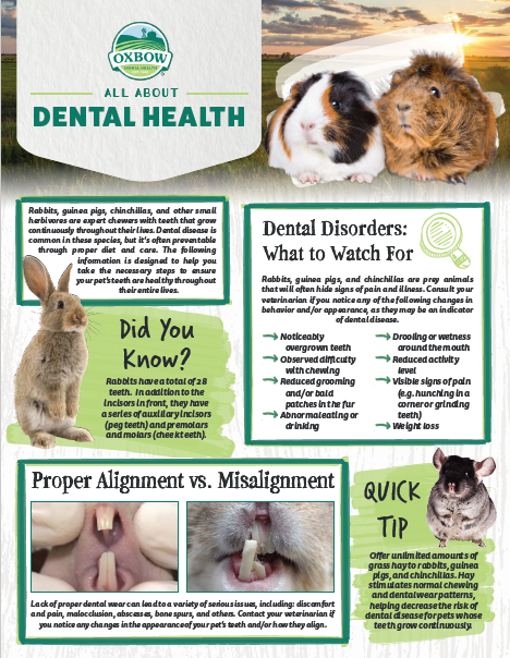 All About Small Pet Dental Health