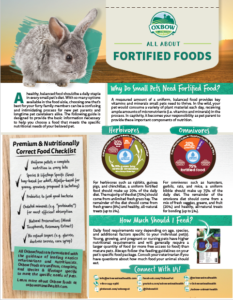 All About Fortified Foods