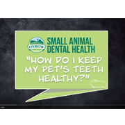 How to Keep Your Pet's Teeth Healthy - Video