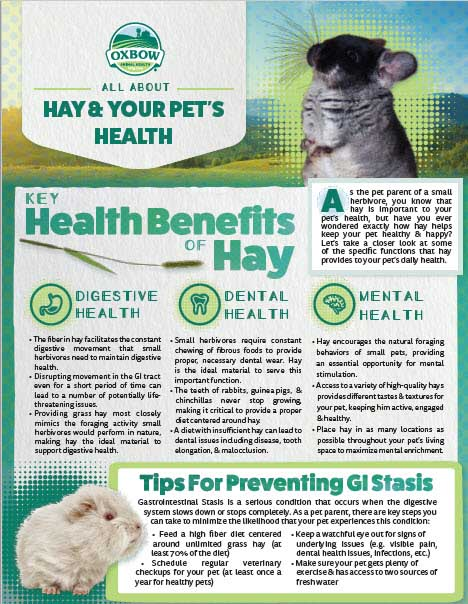 All About Hay and Your Pet's Health