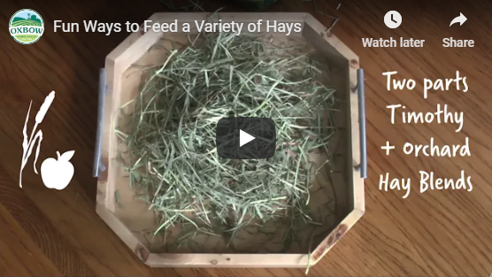 Fun Ways to Feed a Variety of Hays Video